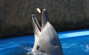 Image of a dolphin receiving food; symbolizes the donation